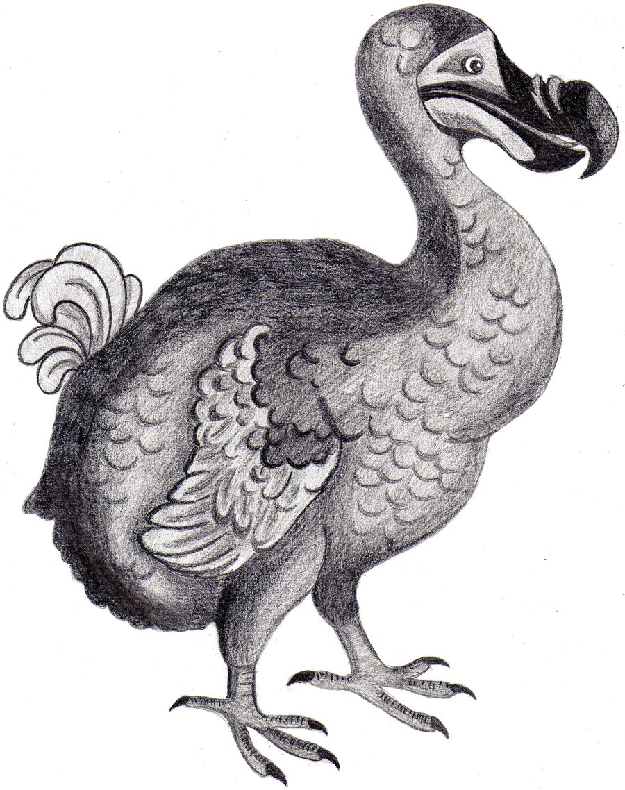 dodo birds The dodo -- an extinct bird made famous in traveling exhibitions and works of fiction -- may be ready for a comeback in early july 2007, scientists working on the island of mauritius, east of madagascar off of the coast of africa, announced the discovery of the best preserved dodo skeleton ever found.