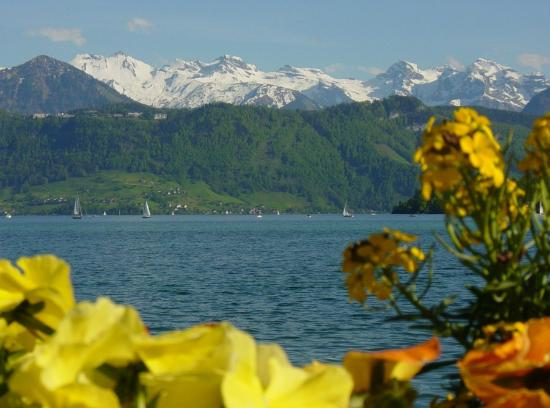 Lake Lucerne with flowers