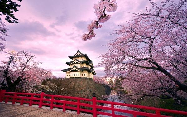 Cherry blossoms at Hirosaki Castle, Japan