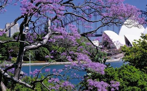 City Hopper: Sydney, Australia   The Swiss Rock