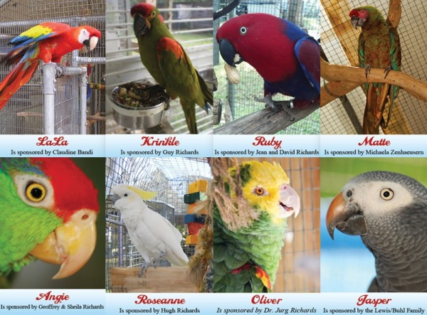 Here are some of the little feathered guys that are now sponsored!