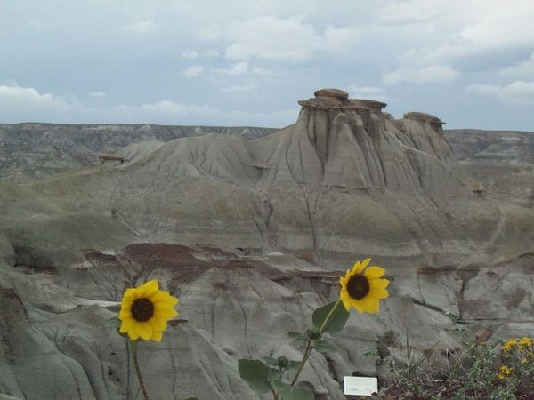 Dinosaur Provincial Park is known for its Badlands topography as seen above.