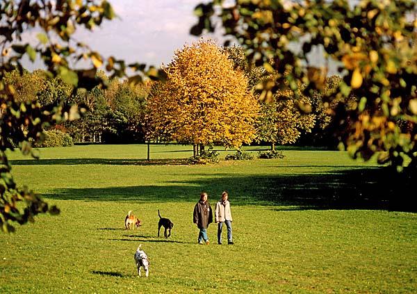 Beautiful green parks of Linz, Austria